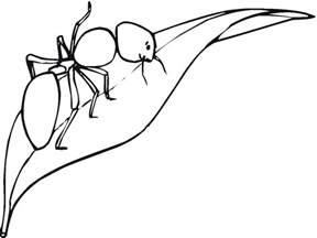 printable ant coloring pages coloring