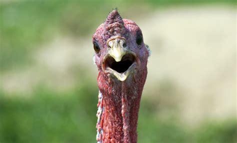 pics of a turkey neck turkey neck women newhairstylesformen2014 com