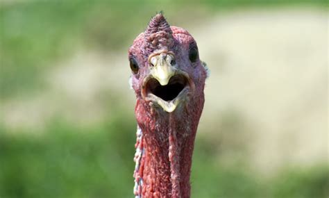 what is a turkey neck on a woman let s talk turkey turkey neck that is aka mom magazine