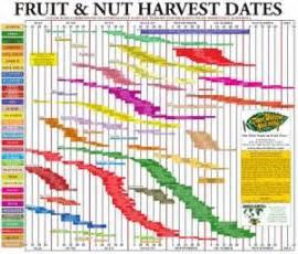 Backyard Orchard Culture Fruit And Nut Harvest Chart Dave Wilson Nursery