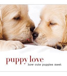 cutest puppies book 1000 ideas about pictures on pictures