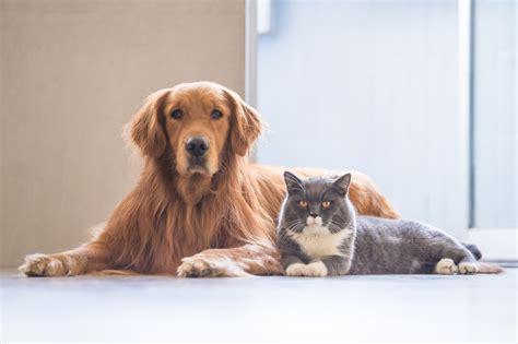 come tenere un gatto in casa come tenere la casa pulita con un non sprecare