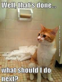 Funny Cats Memes - mission completed fun cat pictures