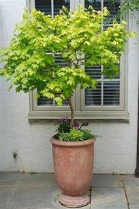 Patio Tree Planters by 25 Best Ideas About Potted Trees On Pinterest Trees In