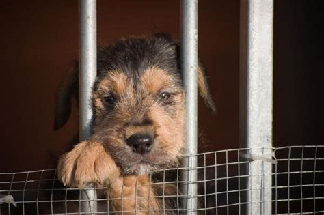 puppy mill facts wisconsin with new style for 2016 2017