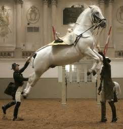 the perfect horse the review of frank westerman s brother mendel s perfect horse daily mail online