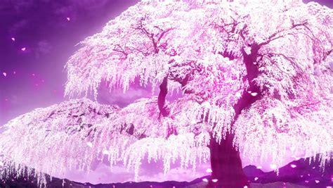cherry tree anime anime cherry blossom wallpaper wallpapersafari