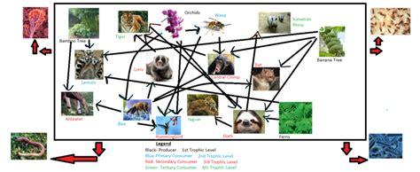 chimpanzee food chain diagram food web tropical rainforest