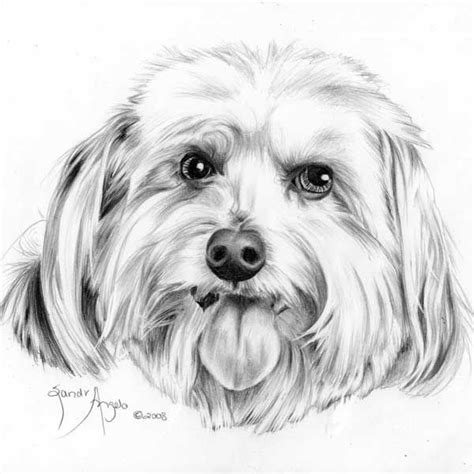 dogs to draw how to draw a s tongue how to draw pets drawing dogs course how to