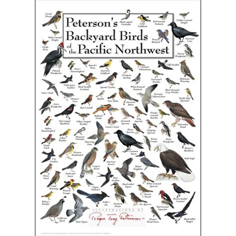 peterson s backyard birds of pacific nw poster card set