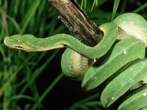 imagenes de serpientes oscuras el ancestro de las serpientes era subterr 225 neo