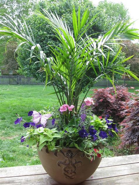 the palm large container garden container gardens