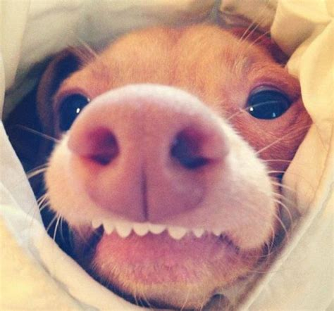 Ugly Smile Meme - the most adorable ugly dog ever 23 pics picture 21