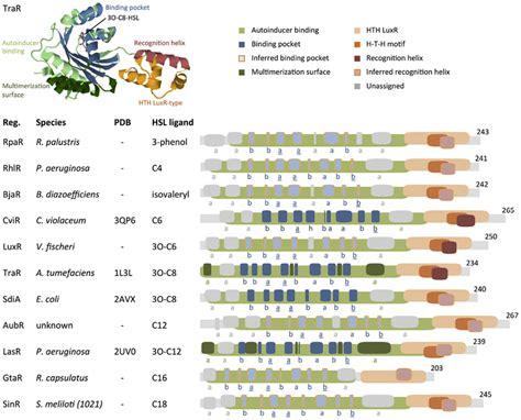pattern select lyrics comparison of protein motifs in select regulators the
