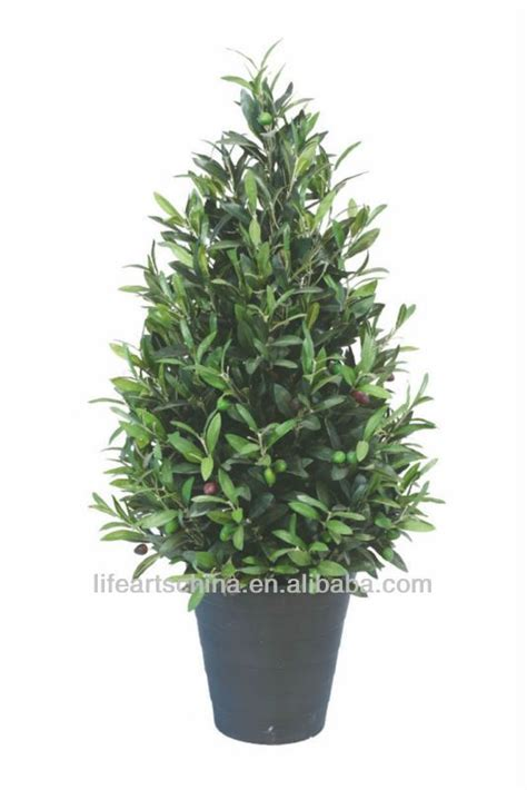 where to buy topiary trees artificial grass plant 100cm olive tree topiary buy