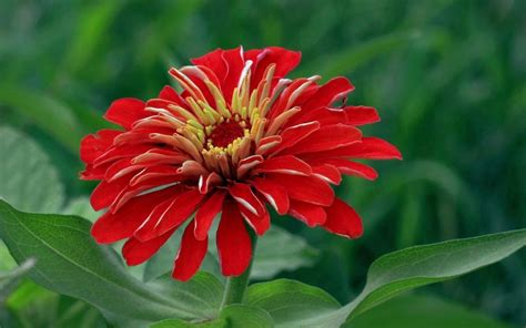 pretty plant names 45 pretty flowers in the world with the names and pictures inspirationseek