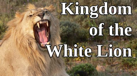 white lion film youtube kingdom of the white lion a man and his passion for wild