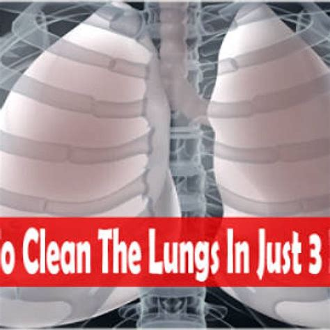 How To Detox Lungs In 3 Days by How To Clean Your Lungs From Nicotine In Only 3 Days