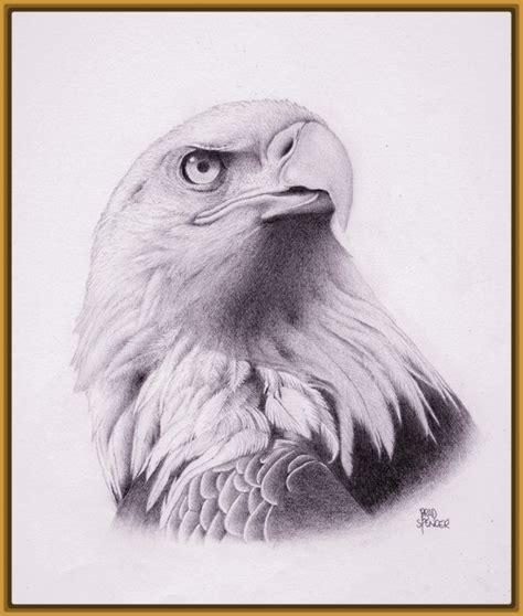 dibujos realistas a lapiz de color dibujos de aves a lapiz archivos imagenes de pajaros