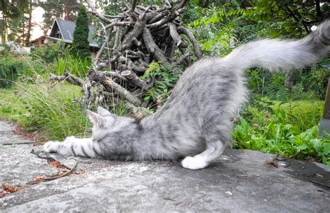 katzen entfernen garten garten f 252 r katzen ausbruchsicher machen kreative ideen