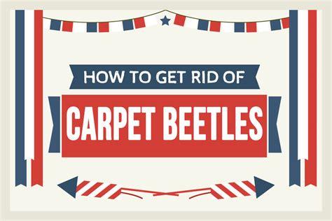 how to get rid of carpet beetles in my bedroom how to get rid of carpet beetles permanently a step by