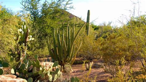 Arizona Botanical Gardens by Desert Botanical Garden In Arizona Expedia