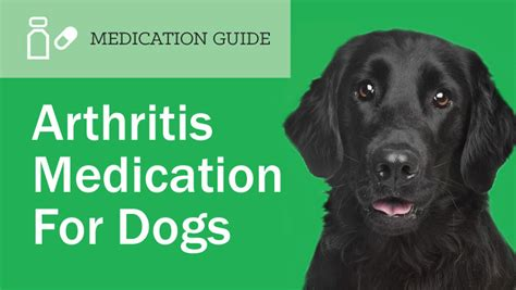 arthritis medication for dogs prescription arthritis medications for dogs entirelypets