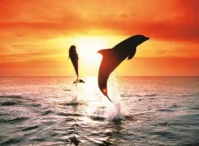 puzzle ravensburger delfini al tramonto 500 pezzi mister toys megastore