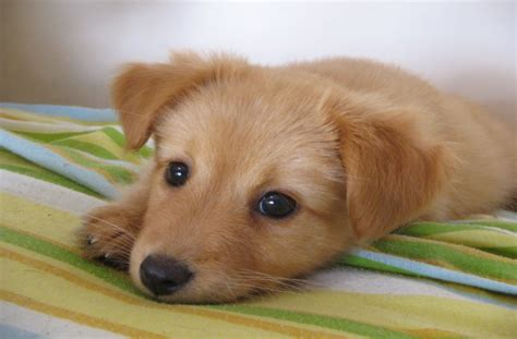 baby puppies for free puppies and kittens and bunnies and hamsters and duckskindofpets kindofpets