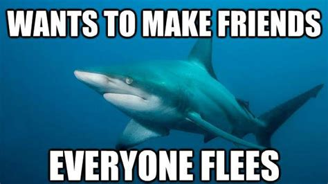 Meme Shark - meme shark 28 images funny shark attacks memes cute