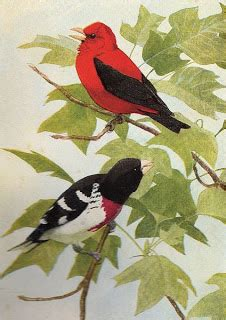 red  black bird graphic  graphics fairy