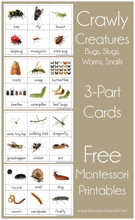 free printable montessori three part cards crawly creatures montessori printables 1 1 1 1