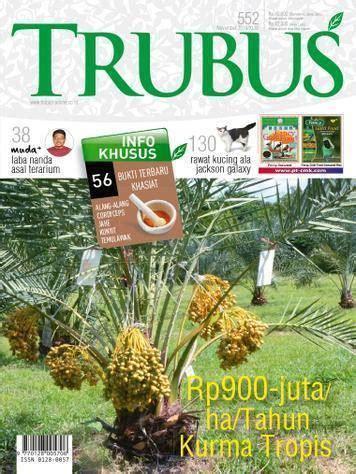 Bibit Buah Di Trubus kurma tropis kl 1 by trubus jualbenihmurah