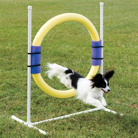 backyard agility course the backyard dog agility course hammacher schlemmer