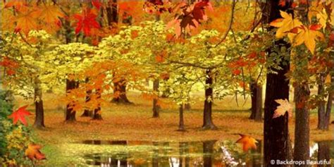 photography ls and backdrops woodland fall backdrop 8 backdrops beautiful