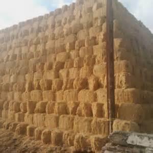 Sekam Bakar Surabaya ptpn x siap sulap as tebu menjadi bioetanol agribisnis
