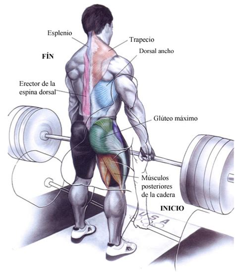 como ganar musculo en casa ejercicios para ganar m 250 sculo en las piernas usafitness