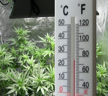 cannabis room temperature humidity and your marijuana plants grasscity magazine grasscity magazine