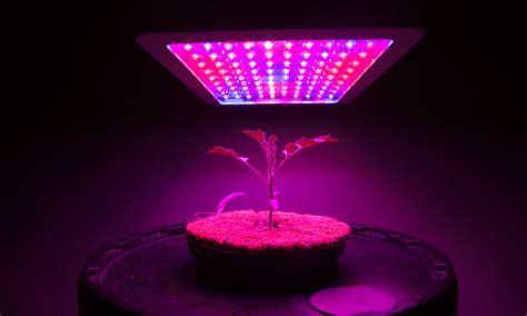best led grow lights cultivation 10 best led grow lights for mmj