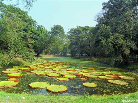 Indian Botanical Garden Panoramio Photo Of Water Lilies Indian Botanic Garden The Largest And Oldest In South