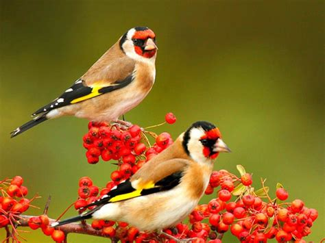 beautiful birds phots birds hd wallpaper free 9to5animations