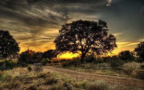 wallpaper hp landscape landscapes nature trees hdr photography best wallpaper