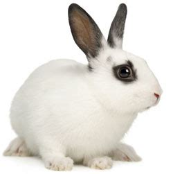 Caring for your pet rabbit