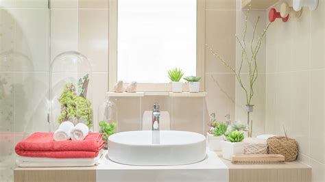 plants for the bathroom 3 benefits of bathroom and shower plants today com