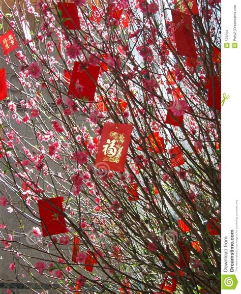 money tree for new year new year money tree stock images image 575234