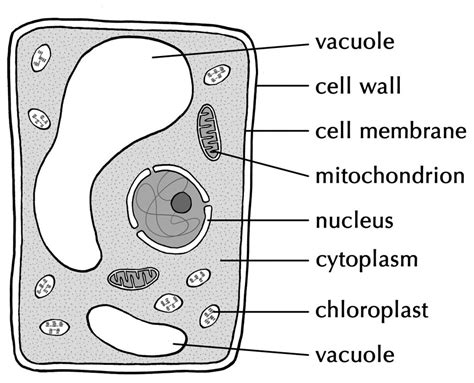 related image cells cells cells plant animal cells