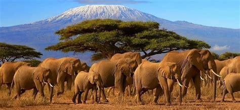 best safari in kenya best tour operators and travel agencies in kenya nairobi