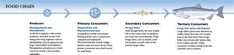 Lake Michigan Food Web Diagram