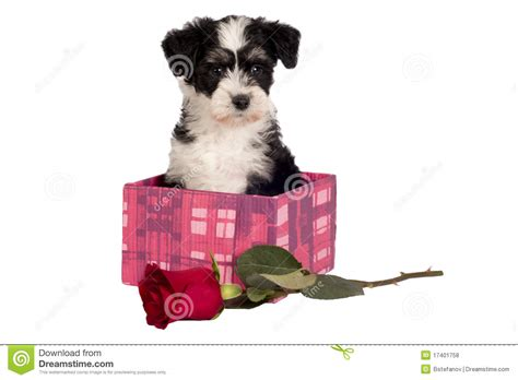 puppy present puppy for present royalty free stock photos image 17401758
