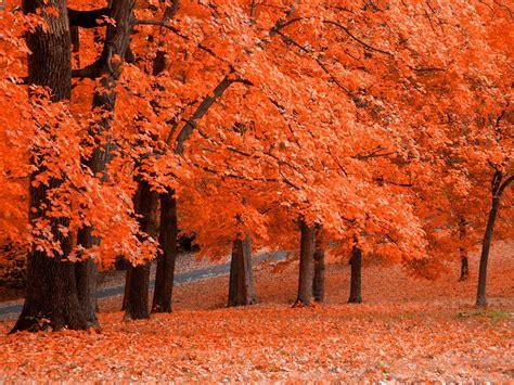 wallpaper daun gugur gambar pemandangan musim gugur yang sangat indah